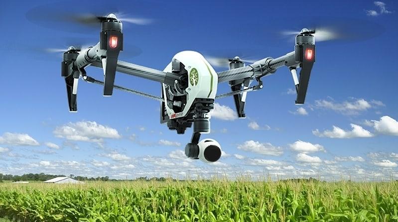 Droni contro la mosca delle olive
